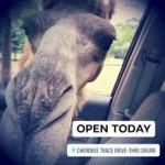East Texas Road Trip Guide – Cherokee Trace Drive Through Safari in Jacksonville